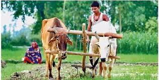 हिन्दी गजल- बंजर भूमि की रोटी |